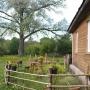 Ludomirowo ogródek przy domu
