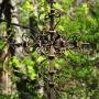 Kuty krzyż na starym nagrobku.