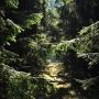 Rezerwat przyrody 'Starodrzew Szyndzielski)- Lebiedzin